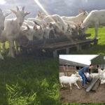 Lekker Nederlands geitenvlees
