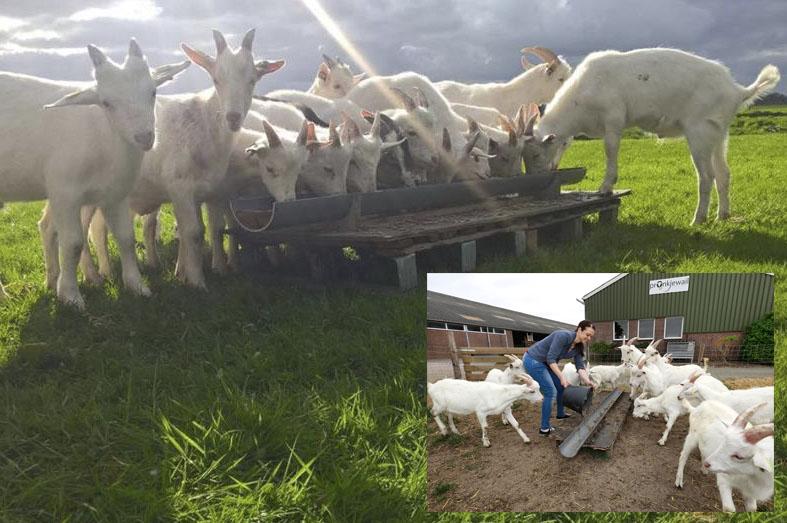 Biologisch geitenvlees