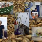 Duurzame Noordzeegarnalen met MSC-keurmerk