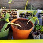 Zaaien voor een tuin vol groenten